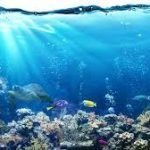 THE INCONSPICUOUS AGONIZING DEATH OF OUR OCEANS